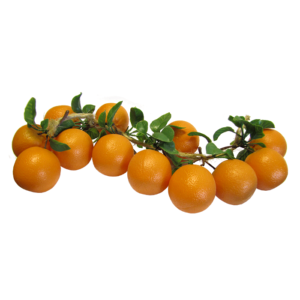 appelsiiniköynnösV