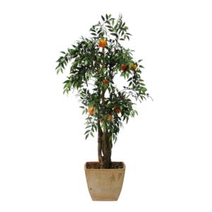 appelsiinipuuV