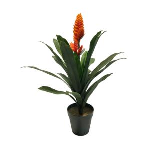 kasvi-oranssiV