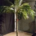 Medium palmu 2